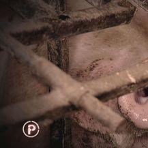Provjereno donosi priču o antibioticima u mesu 1 (Foto: Provjereno)