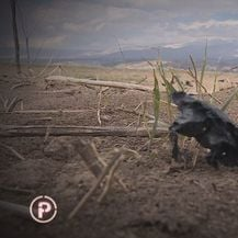 Zapušteno zemljište (Foto: Dnevnik.hr) - 2