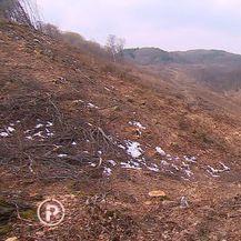 Posječena šuma (Foto: Dnevnik.hr) - 1