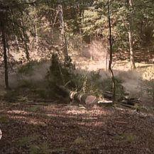 Posječena šuma (Foto: Dnevnik.hr) - 2