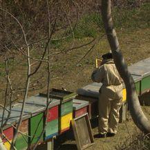 Pčelar u selu Mače (Foto: Dnevnik.hr)