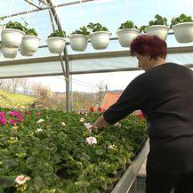 Uzgajivačica cvijeća Štefica iz sela Mače (Foto: Dnevnik.hr)