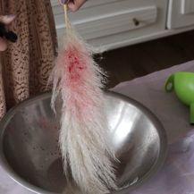 Bojenje pampasa sa sastojcima iz hladnjaka - 2