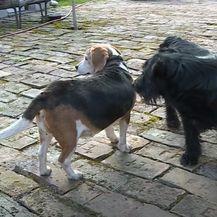 Kampanja protiv držanja pasa na lancu - 9