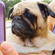 Samsung Galaxy S9 (Foto: Samsung)