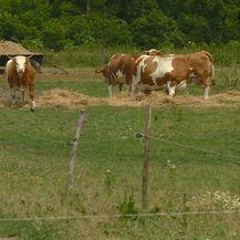 U napuštenom selu pokrenuo farmu (Foto: Dnevnik.hr) - 2
