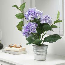 Fejka lila hortenzija može biti savršeni ukras za dom
