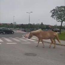 Konj prošetao Zagrebom (Foto: Dnevnik.hr) - 2