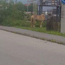 Konj prošetao Zagrebom (Foto: Dnevnik.hr) - 3