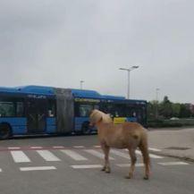 Konj na cesti (Foto: Dnevnik.hr)