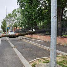Srušeno stablo u centru Đakova (Foto: Facebook) - 6