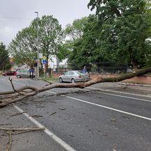 Srušeno stablo u centru Đakova (Foto: Facebook) - 7