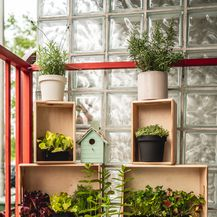 Genijalna ideja za vertikalni vrt