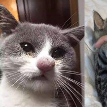 Mačke vs pčele (Foto: sadanduseless.com)