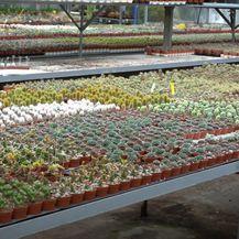 Informer: Kaktusi i sukulenti - 7