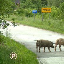 Umirovljeni brigadir prijetio ekipi Provjerenog - 1