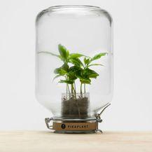 Pikaplant Jar (Foto: Zadovoljna.hr)