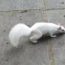 Albino životinje (Foto: brightside.me) - 17
