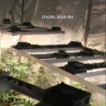 U Zadru pronađena droga vrijedna dva milijuna kuna (Video: Vijesti u 17h)