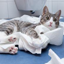 Mačka (Foto: Getty Images)