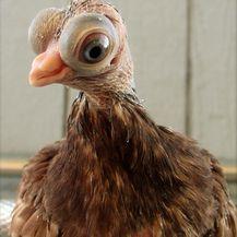 Neobične životinje (Foto: brightside.me) - 15
