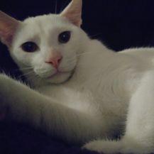 Mačji selfie (Foto: brightside.me) - 17