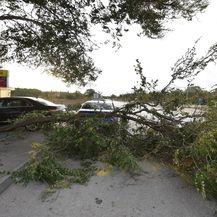 Jak vjetar srušio stablo u Dubravi kod Šibenika (Foto: Hrvoje Jelavic/PIXSELL)