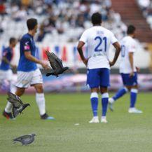 Golubovi na utakmici Hajduk - Varaždin (Foto: Milan Šabić/PIXSELL)