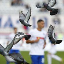 Golubovi na utakmici Hajduk - Varaždin (Foto: Ivo Čagalj/PIXSELL)
