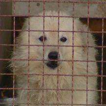 Psi iz koprivničkog skloništa (Foto: Dnevnik.hr)