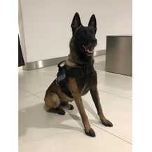 Policijski pas As pronašao 9 kilograma amfetamina u autu (Foto: PUZ)