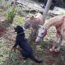 Nestali magarac i kobila (Foto: Dnevnik.hr) - 5