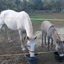 Nestali magarac i kobila (Foto: Dnevnik.hr) - 6