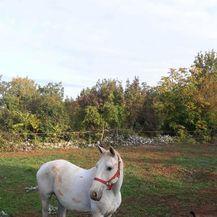 Nestali magarac i kobila (Foto: Dnevnik.hr) - 7