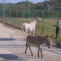 Pronađeni Puki i Etna (Foto: Dnevnik.hr) - 3