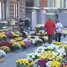 Cvijeće (Foto: Dnevnik.hr)