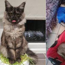 Mačke trolovi (Foto: brightside.me)
