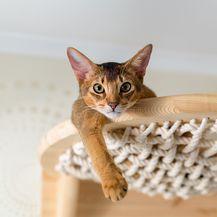 Purina ProPlan za kvalitetniji život mačke