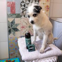 Šampon Shapello dolazi u tekućoj i krutoj varijanti