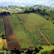 Vinogradi Kolarić