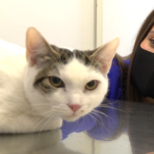 Spock kod veterinara