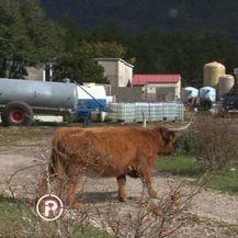 Bespravna gradnja na Velebitu, emisija Provjereno - 7