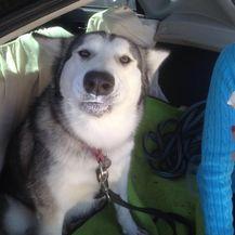 Husky (Foto: brigthside.me) - 17
