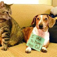Zločesti psi (Foto: thechive.com) - 17