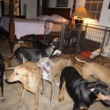 Psi u kući Chelle Phillips (Foto: Chella Phillips/Voiceless Dogs of Nassau) - 1