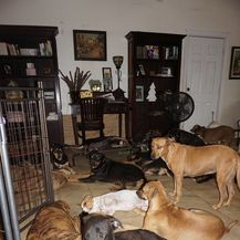 Psi u kući Chelle Phillips (Foto: Chella Phillips/Voiceless Dogs of Nassau) - 4