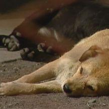 Psi leže na podu (Foto: Dnevnik.hr)