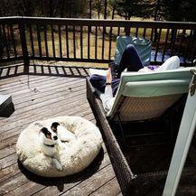 Krevetić za pse koji smiruje ljubimca - 1