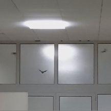Šišmiši u pulskoj bolnici (Foto: Dnevnik.hr) - 2