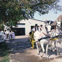 Kola i konji spremni su za Vinkovačke jeseni